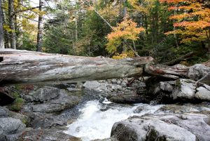 river and waterfall with log