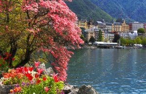 city on a lake and under mountains with pink flower trees