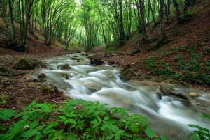 flowing river in woods