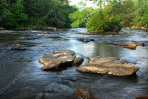 river with rocks sticking out in forest
