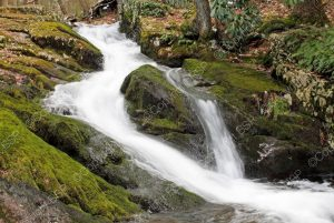 waterfall and flowing river in forest