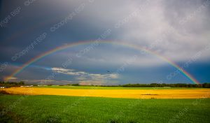 field with rainbow over it
