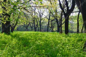 grass field under trees